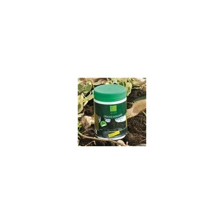 Verde Vivo ORMONE RADICANTE - gr.100